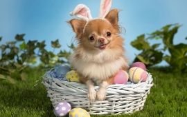 Easter Day Dog