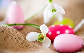 Easter Eggs And Snowdrops