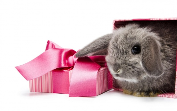 Easter Gift (click to view)