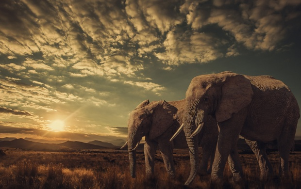 Elephants Sunset wallpapers