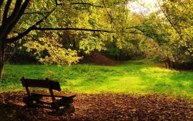 Empty Bench in the Forest
