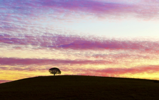 Evening Hill Tree (click to view)