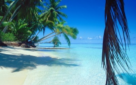 Exotic Beach on Tropical Island