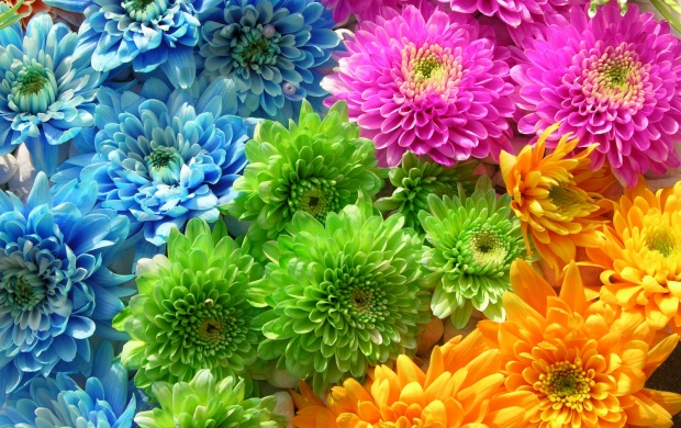 Extreme Colors Flowers (click to view)