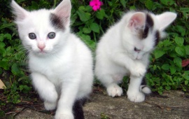 Extremely Cute Cats