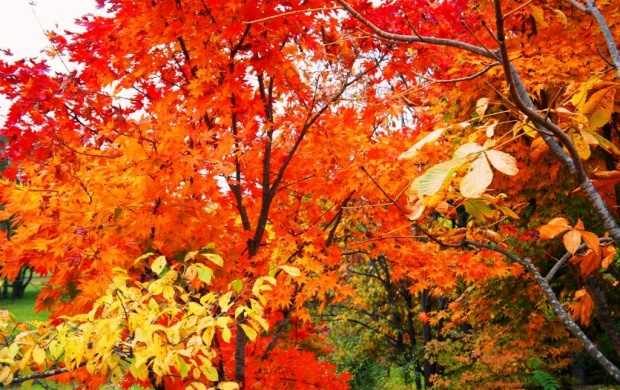 Fall Leaves (click to view)