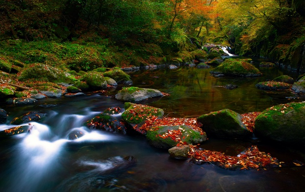 Fantastic Forest River (click to view)