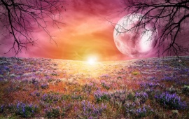 Fantasy Field Of Lavender