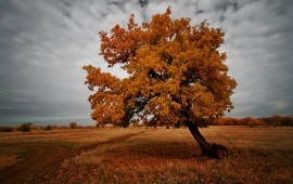 Field In Autumn Tree