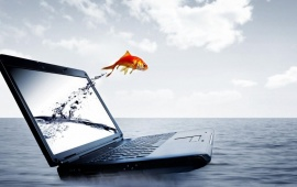 Fish Jump From Laptop