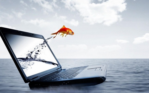 Fish Jump From Laptop (click to view)