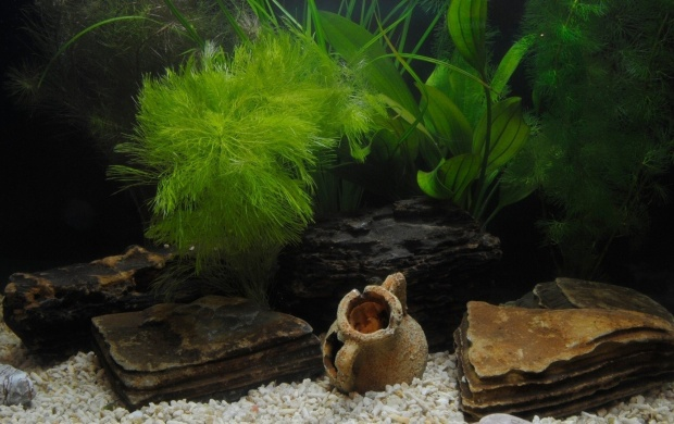Fish Tank Decorations (click to view)