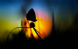 Flower On Butterfly Evening Time