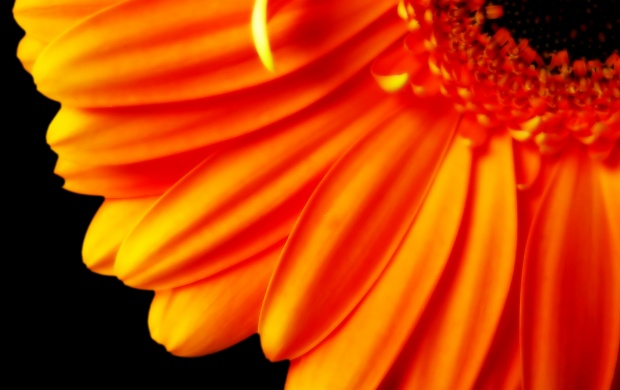 Flower with Orange Petals (click to view)