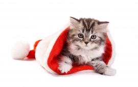 Fluffy Cat In Santa Hat