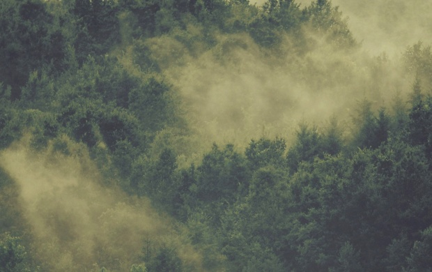 Fog Above Forest Trees (click to view)