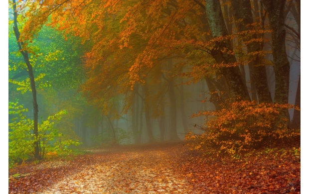 Foggy Autumn Day In The Forest (click to view)