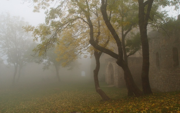 Foggy Autumn Forest (click to view)