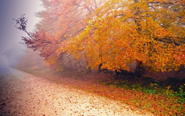 Foggy Autumn Morning (click to view)