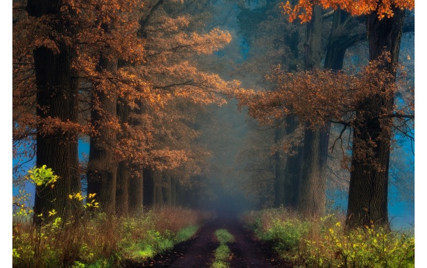 Foggy Autumn Pathway (click to view)