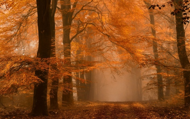 Foggy Day In The Autumn (click to view)