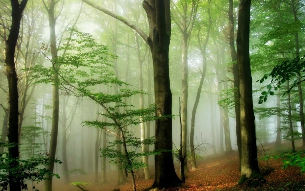 Foggy Forest (click to view)