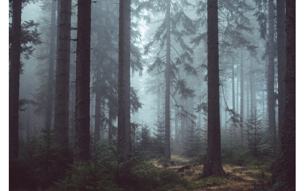Foggy Forest Day (click to view)