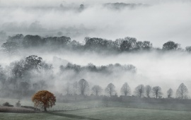 Foggy Hills With Trees