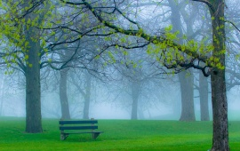 Foggy Park In Bench