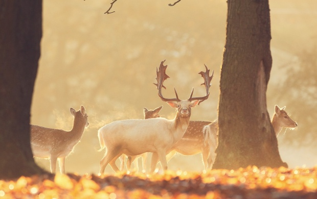 Forest Deer Group (click to view)