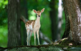 Forest In Baby Deer