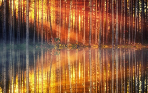 Forest Lake Reflection (click to view)