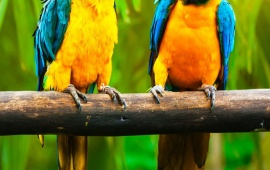 Forest Parrots Color