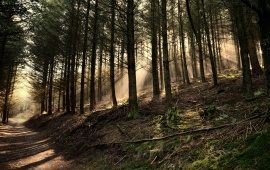 Forest Pathway And Sun Rays