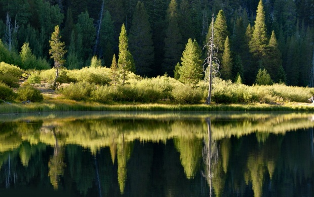 Forest Reflected in the Lake (click to view)