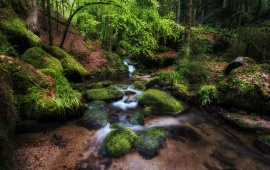 Forest River And Moss