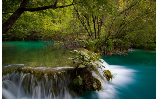 Forest River and Small Waterfall (click to view)