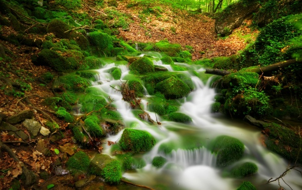 Forest River Scenery (click to view)