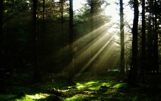 Forest Sun Rays (click to view)