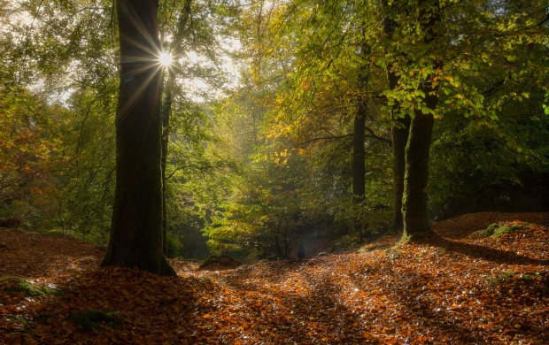 Forest Sunrays (click to view)