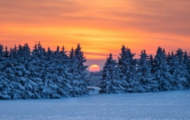 Forest Sunset Snow