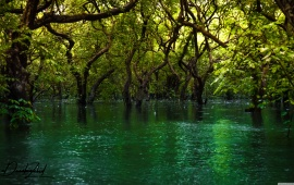 Forest Trees in the Water