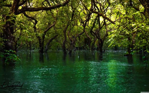 Forest Trees in the Water (click to view)
