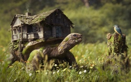 Forest Turtle On House