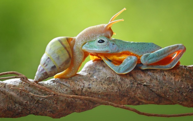 Frog And Snail Friends (click to view)