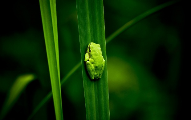 Frog Green Plants Bog (click to view)