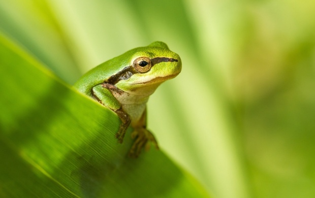 Frog Nature Background (click to view)