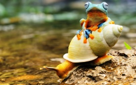 Frog Sitting On Snail