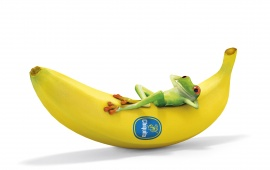 Frog Sleeping Banana