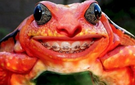 Frog Teeth Braces